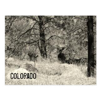 Fauna de Colorado Postal