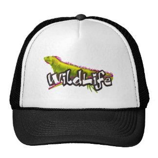 Fauna de la iguana gorros