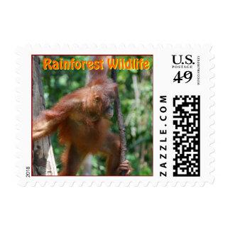 Fauna de la selva tropical del orangután sello