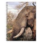 Fauna de los amantes del elefante libro de apuntes con espiral