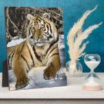 Fauna de los amantes del tigre placa