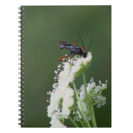 Fauna de los insectos de los arácnidos de los inse libretas