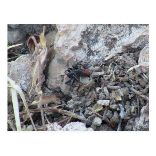 Fauna de los insectos de los arácnidos de los tarjetas postales