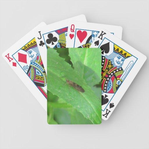 Fauna de los insectos de los insectos/de los arácn baraja cartas de poker