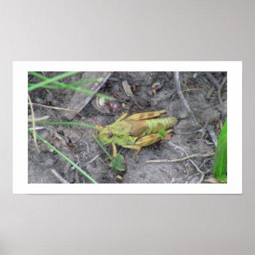 Fauna de los insectos de los insectos/de los arácn impresiones