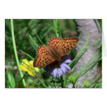 Fauna de los insectos de los insectos/de los arácn tarjetón