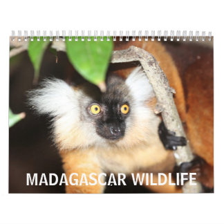 Fauna de Madagascar Calendarios De Pared