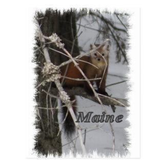 Fauna de Maine - marta de pino Postal