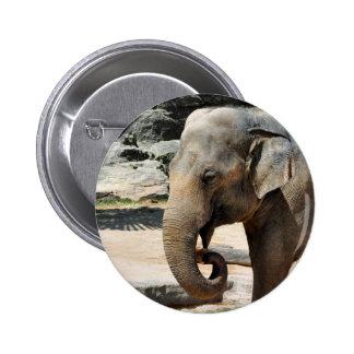 Fauna de risa del parque zoológico del elefante as