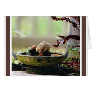 Fauna del agujero de riego de la mangosta felicitación