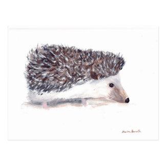 Fauna del animal salvaje del erizo tarjetas postales