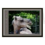 Fauna del camello del dromedario felicitación