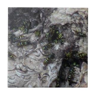 Fauna del insecto del arácnido de los insectos de  azulejo