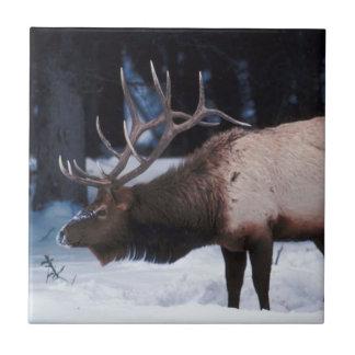 Fauna del invierno con las astas en la nieve azulejo cuadrado pequeño