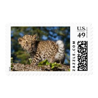 Fauna del leopardo de Amur Timbres Postales