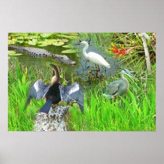 Fauna del parque nacional de los marismas de la Fl Póster
