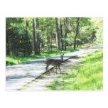 fauna en los smokies #72 postales