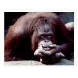 Fauna fijada - primates 10
