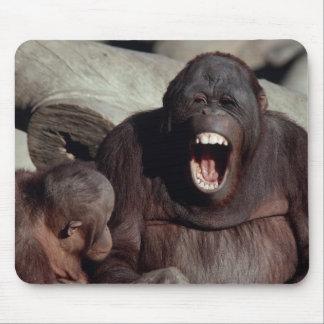Fauna fijada - primates 1 mouse pads