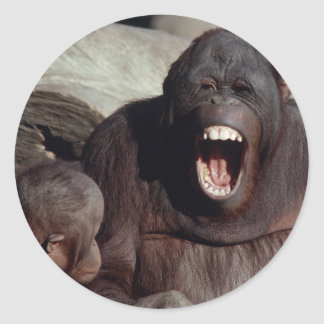 Fauna fijada - primates 1 etiquetas redondas