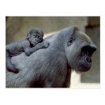 Fauna fijada - primates 3 tarjetas postales