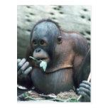 Fauna fijada - primates 4