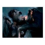 Fauna fijada - primates 6