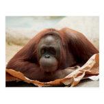 Fauna fijada - primates 7