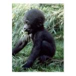 Fauna fijada - primates 8