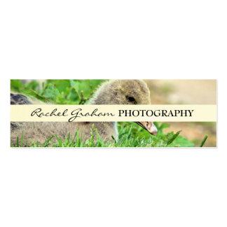 Fauna - fotografía tarjetas de visita mini