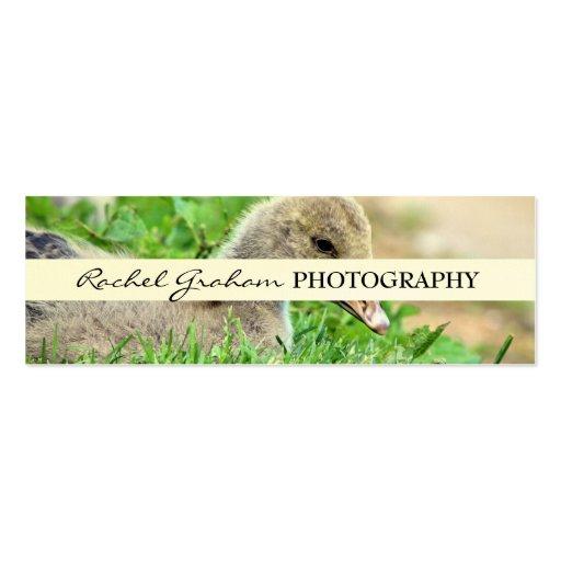 Fauna - fotografía tarjetas de visita