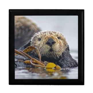 """Fauna lutris del Enhydra"""" de la nutria de mar de l Caja De Recuerdo"""