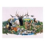 Fauna norteamericana tarjeta postal