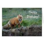 Fauna salvaje del animal del Fox Felicitaciones