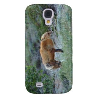 Fauna salvaje del animal del Fox