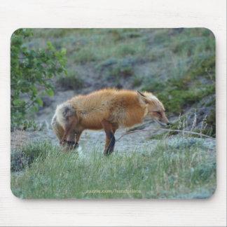 Fauna salvaje del animal del Fox Tapete De Ratón