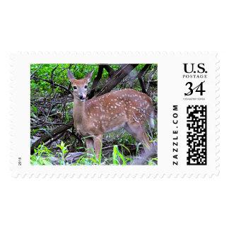 Faun's Innocence Postage Stamp