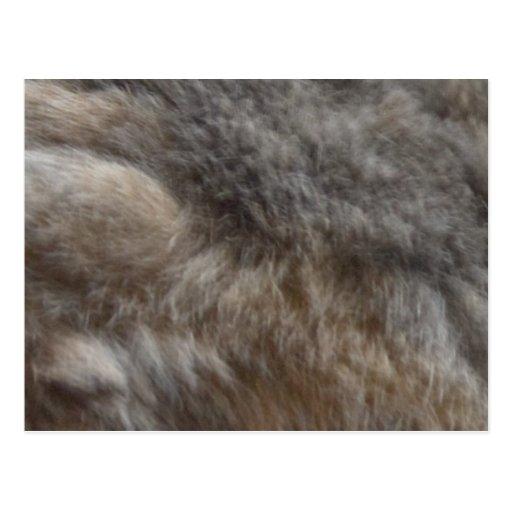 Faux Cat Fur look Postcard