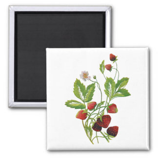 Faux Embroidered Fresh Strawberries 2 Inch Square Magnet