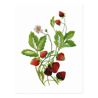 Faux Embroidered Fresh Strawberries Postcard