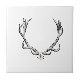 Faux Taxidermy Antler Study VOL 1 Small Square Tile