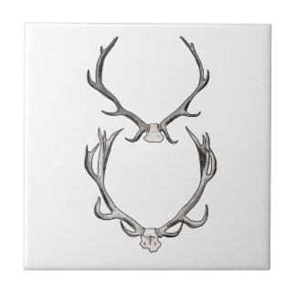 Faux Taxidermy Antler Study VOL 2 Small Square Tile
