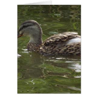 Fav little duckie card