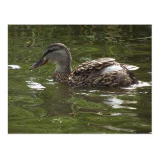 Fav little duckie postcard