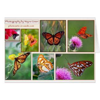 Favorite Butterflies Card