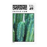 Favorito del cactus de California de un artista