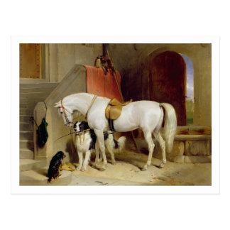 Favourites de príncipe George (aceite en lona) Tarjeta Postal
