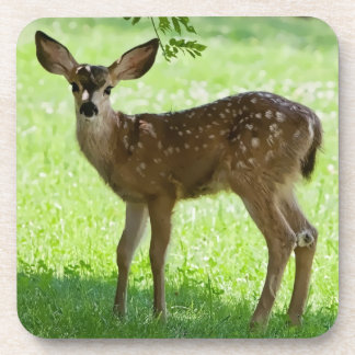 FAWN 1 BEVERAGE COASTER