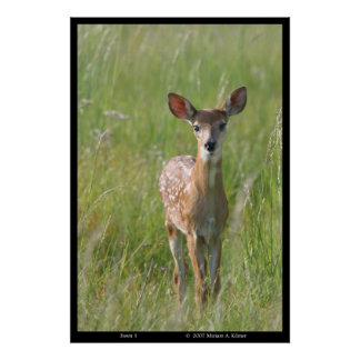 Fawn 1 nature photograph white-tail deer print