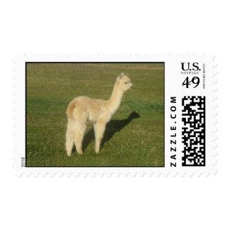 Fawn alpaca postage stamp